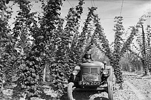 Beer Hops Field