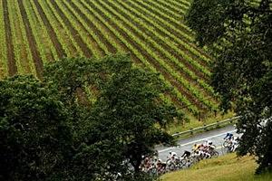 California Wine Vinyards