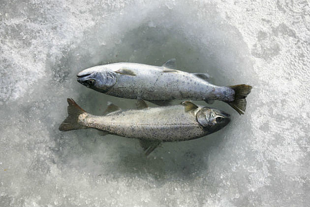 Winter family fun days at maine 39 s state parks for Maine state fish