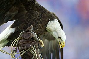 post_bald-eagle_michael-chang